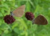 How to Save Europe's Threatened Butterflies [LiveScience 2012-03-29]