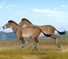 Ancient Horse Bones Tell Story of Tibetan Plateau [LiveScience 2012-04-23]