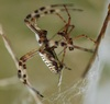 For Males Dying to Mate, Only Certain Females Will Do [LiveScience 2012-04-25]