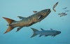 Ancient 'Rebel' Fish Had Shark-Like Personality [LiveScience 2012-05-02]