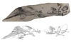 ...Images of a 'Rebel' Coelacanth - Fork-tailed coelacanth, Rebellatrix divaricerca [LiveScience 20