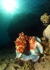 Octopus Foils Predators by Stealing Identities [LiveScience 2012-05-23]