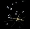 How Tiny Mosquitoes Survive Raindrops' Blow [LiveScience 2012-06-04]