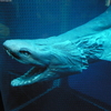 Procreation Station: What Species Has the Craziest Pregnancy? [LiveScience 2012-06-05]