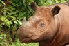 'Year of the Rhino' Begins in Bid to Save Species [LiveScience 2012-06-06]