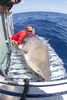 Photo: Giant Bull Shark Surprises Researchers [LiveScience 2012-06-07]