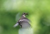 Birds Best Bats In Flying Game [LiveScience 2012-06-08]
