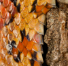 Snakes' Scales Propel Them Up Tree Trunks [LiveScience 2012-06-12]