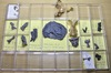 Distant Human Ancestor Had Shark Head [LiveScience 2012-06-13]