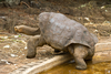 Should We Have Cloned Lonesome George? [LiveScience 2012-06-28]