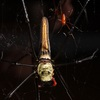How One Female Spider Says 'No' to Sex [LiveScience 2012-08-02]