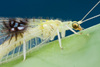 New Bug Species Found in Photos Online [LiveScience 2012-08-08]