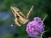 Climate Change Pushes Butterflies North [LiveScience 2012-08-20]