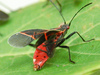 Bug Sunbathes to Keep Germs Away [LiveScience 2012-08-24]