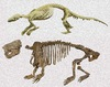 Creature Added to Mammal Family Tree [LiveScience 2012-08-27]