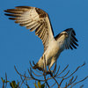 Migrating Birds Expected to Pass Over Lighting of Sept. 11 Memorial [LiveScience 2012-09-08]
