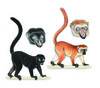 ...Image Gallery: 25 Primates in Peril - Blue-eyed black lemur (Eulemur flavifrons) [LiveScience 20