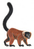 Image Gallery: 25 Primates in Peril - Red ruffed lemur (Varecia rubra) [LiveScience 2012-10-15]