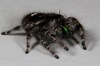 Jeepers, Peepers: Why Spiders Have So Many Eyes [LiveScience 2012-10-17]