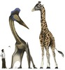 Jet-Size Pterosaurs Took Off from Prehistoric Runways [LiveScience 2012-11-08]