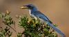 New Count Reveals One of Rarest US Birds [LiveScience 2012-11-14]
