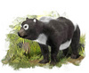 Oldest Panda Fossils Found in Surprising Place [LiveScience 2012-11-14]