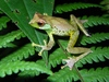Singing frog among 36 new species found in Vietnam [TuoitreNews 2012-12-19]