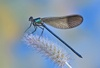 Dragonfly Shows Human-Like Power of Concentration [LiveScience 2012-12-27]