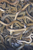 Mysterious Eels' Mating Migration Tracked [LiveScience 2013-01-14]