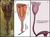 500-Million-Year-Old Animal Looked Like a Tulip [LiveScience 2013-01-17]