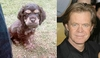 Celebrity Animal Look Alike - Dog vs. William H. Macy