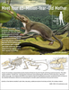 ...Mother of Mammals: Meet the Earliest Placental Mammal Ancestor (Infographic) [LiveScience 2013-0