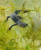 Newt Pheromones Put Females into Mating Frenzy [LiveScience 2013-02-26]
