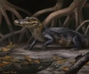 Ancient Seaways Carried Alligators to South America [LiveScience 2013-03-04]