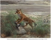 Prehistoric Wolf Ice-Skated to Remote Island [LiveScience 2013-03-05]