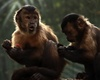Monkeys Shun Selfish Others [LiveScience 2013-03-05]