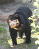 Fun Facts About Bears [LiveScience 2013-03-05]