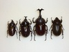 Images: Amazing Rhinoceros Beetles [LiveScience 2010-03-12]