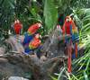 Fun Facts About Parrots [LiveScience 2013-03-20]