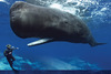 How Whales' Ancestors Left Land Behind [LiveScience 2013-03-21]