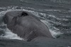 Antarctic Blue Whales Found With Sound [LiveScience 2013-04-04]