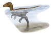 Dinosaurs Did a Doggy Paddle [LiveScience 2013-04-09]