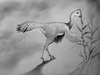 Feathered Dinos Were Diverse Like Darwin's Finches [LiveScience 2013-04-30]