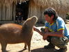 Cute capybara [LiveScience 2013-05-01]