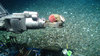Photos: Unique Life Found at East Coast Gas Seep [LiveScience 2013-05-09]