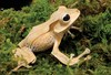 Image Gallery: Cute and Colorful Frogs [LiveScience 2013-05-16]