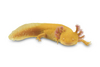 Missing Parts? Salamander Regeneration Secret Revealed [LiveScience 2013-05-20]