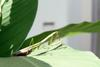 사마귀 (Praying Mantis)