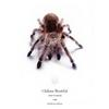Chilean Beautiful(Grammostola cala) - Chile