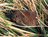 Vole Population Booms on the Decline in Europe [LiveScience 2013-04-04]